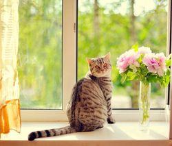 Ошейник от клещей для кошек