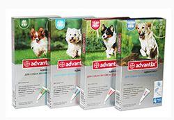 Как применять Адвантикс от клещей для собак