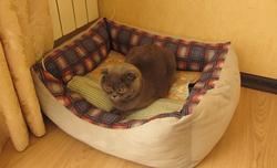 Кот в своей корзинке