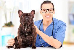 Прием у ветеринара