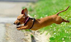 Как защитить собаку от клещей на улице