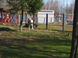 Обработка парка